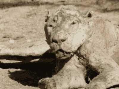 动物园的真相 这所动物园的动物惨遭饿死